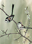 Julian Williams: Long Tailed Tits