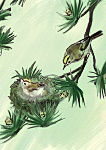 Julian Williams: Goldcrest