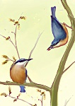Julian Williams: Nuthatches