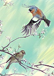 Julian Williams: Chaffinches