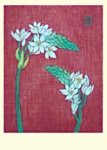 Yuko Hirose: Ornithogalum
