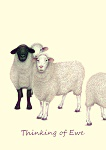Lisa DAndrea: Thinking Of Ewe