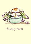 Anita Jeram: Bedding Plants