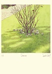 David Suff: Crocuses-March