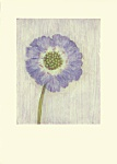 Melanie Epps: Single Scabious